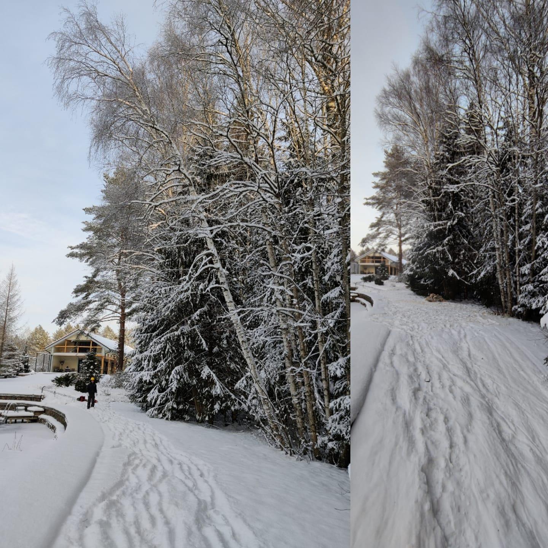 Arboristi töö Viljandimaal